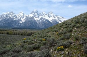 Wildflowers on a sage slope overlooking the Grand Tetons May 2013