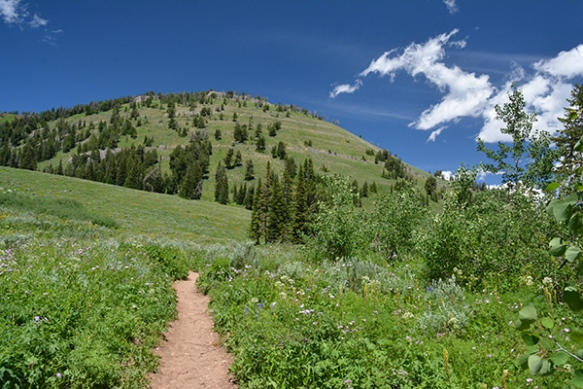 Walk through the meadows up to Ski Lake, and beyond.
