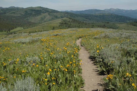 Wally's World trail off Fall Creek Road near Munger Mountain was full of wildflowers June 20.