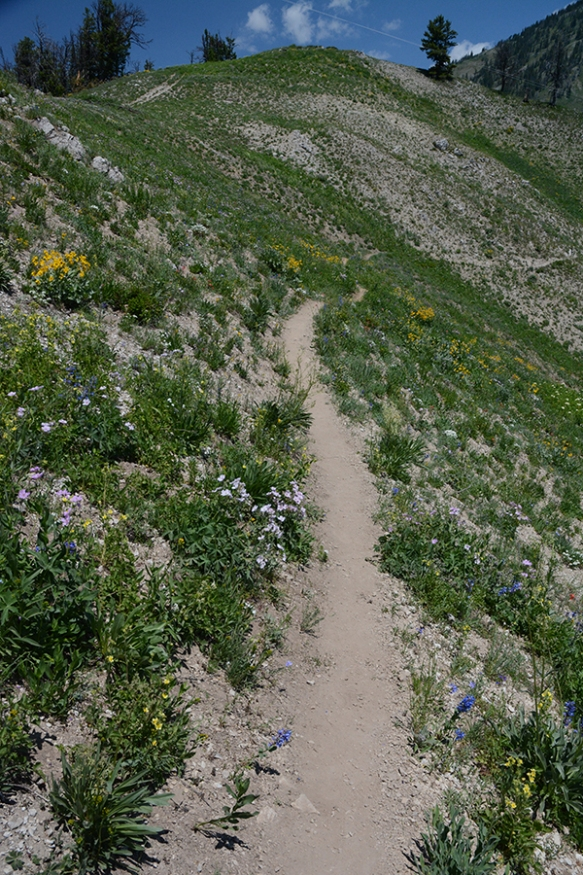 The trail south from Teton Pass travels through some limey talus--hot and dry--with interesting plants!
