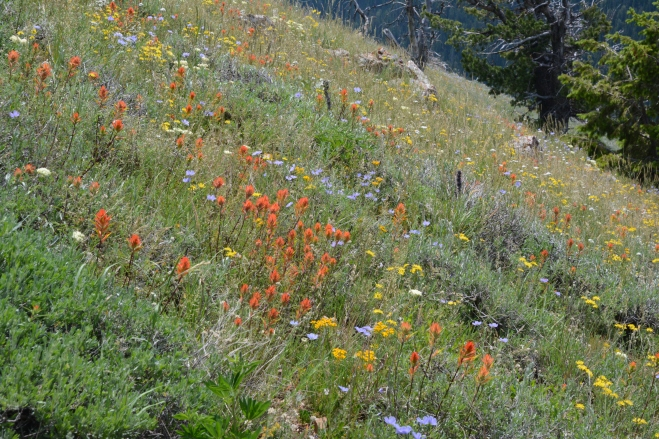 At the south end of the trail, Indian Paintbrush creates a remarkable display remeniscent of an Impressionist painting.