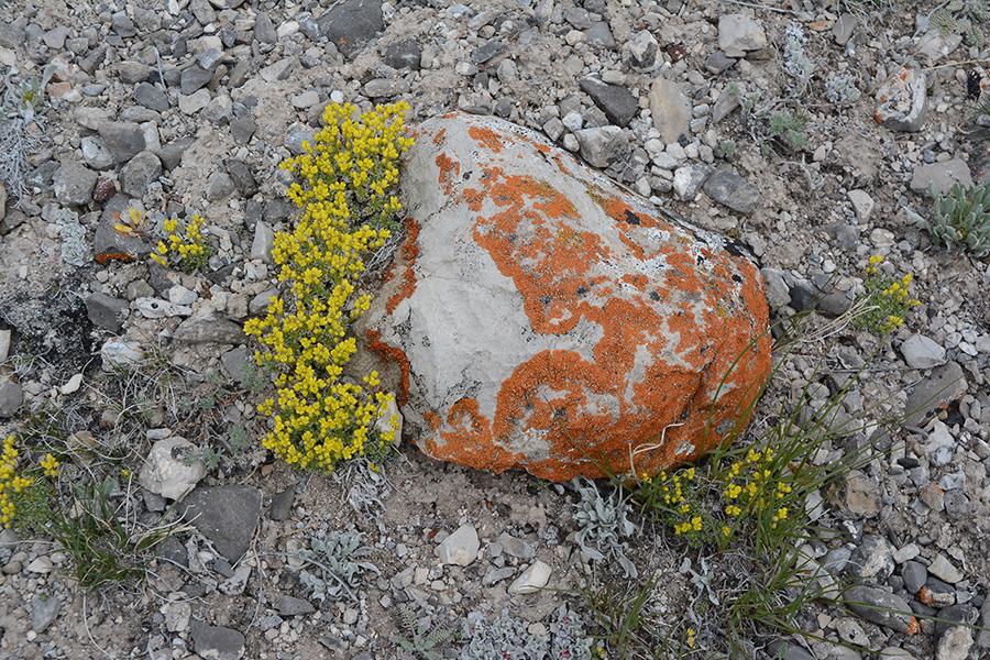DrabSp_fhab_rock_NendNER_5.14.20_1_Q2_5x3_180